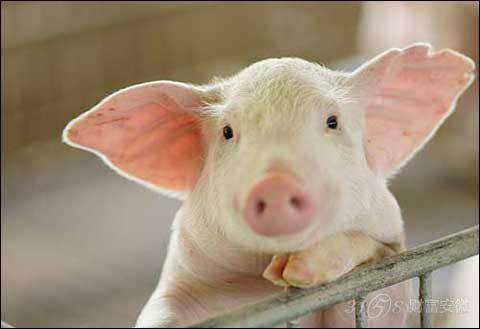 猪钩织图解