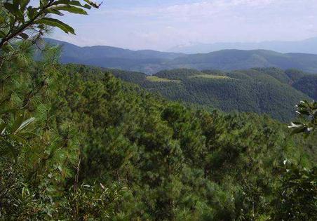 如何利用农村山林赚钱