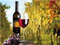 投资酒水行业有前景吗?葡萄酒代理哪