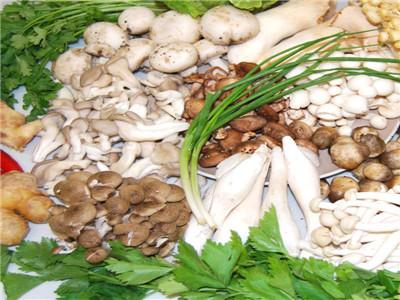 中盛永基食用菌学费是多少?怎么加盟中盛永基食用菌
