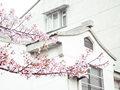 安徽合肥哪几个地方可以赏梅?赏梅花景点推荐
