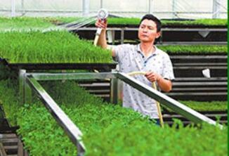 芽苗人家芽苗菜工坊加盟费多少钱?前期总共需要多少钱