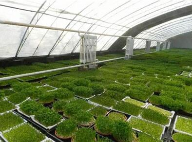 芽苗人家芽苗菜工坊種植加盟成本多少