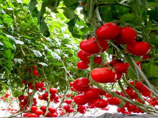 開一家中農共信有機瓜菜工廠總共需要投入多少*