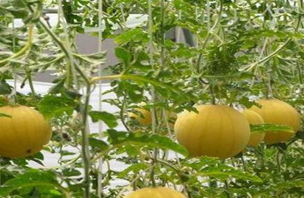 中农共信有机瓜菜工厂加盟费用是多少