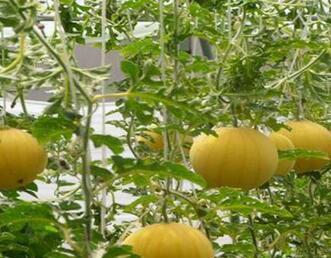 中农共信有机瓜菜工厂加盟多少*