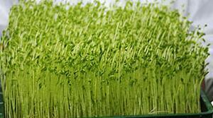 農村做蔬菜工廠賺錢嗎?