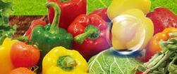 加盟中农共信有机瓜菜工厂一共多少钱?市场如何