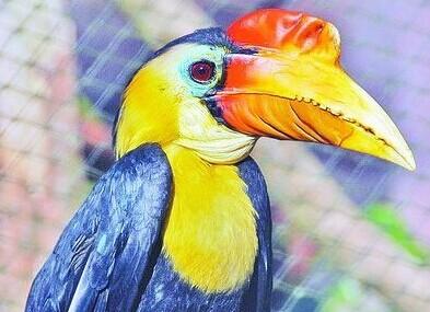 壁纸 动物 鸟 鹦鹉 393_285