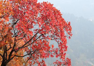 2017年北京香山的红叶什么时候最好看?几月份最红