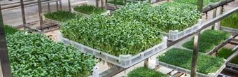 开一家芽苗人家芽苗菜工坊一共要多少钱?总投资高不高