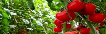 开一家中农共信有机瓜菜工厂需要多少加盟费?总投资多少钱