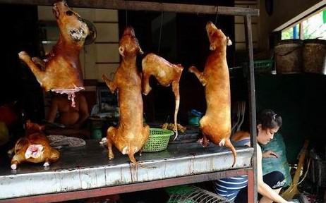 哪种人不能吃狗肉_越南人更有一句老话说:\