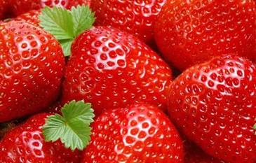 变质水果矢量图片