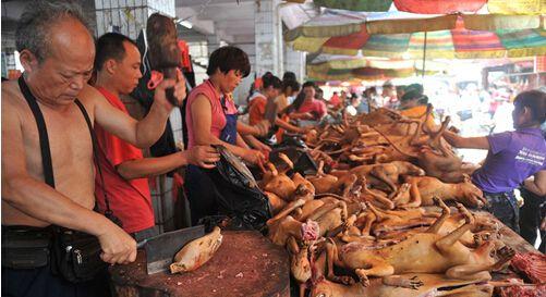 广西玉林狗肉节遭舆论抵制 高清图片