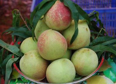九仙桃什么时候成熟?九仙桃什么时候上市?