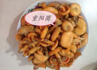 重阳菌多少钱一斤?重阳菌怎么清洗?