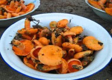 枞树菌有毒吗?枞树菌怎么做好吃?