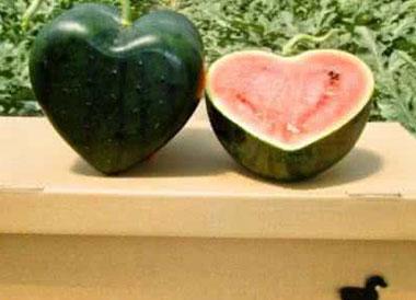 心形西瓜是什么品种?心形西瓜多少钱一斤?