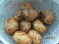 豆豉土豆饼