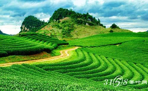 龙井茶的产地在哪图片