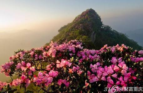 四川光雾山杜鹃花节将于4月1日至5月25日在巴中市