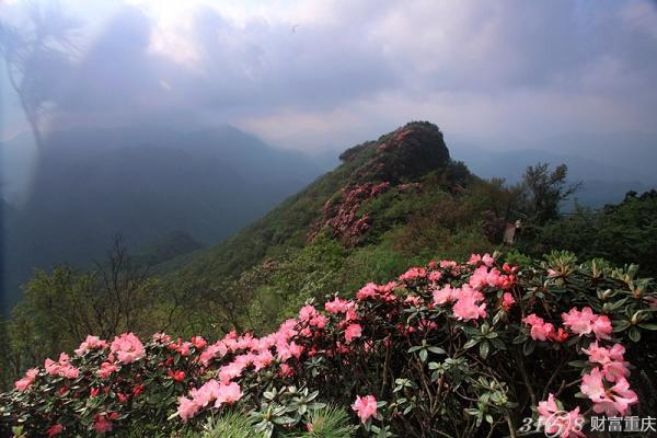 四川光雾山杜鹃花节于4月1日至5月25日在巴中市南江