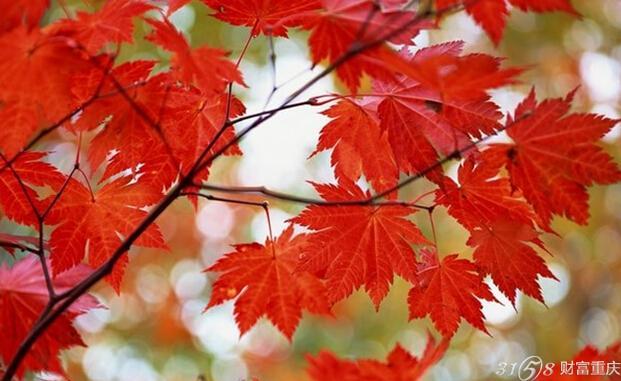 2015北京香山红叶节有什么活动?