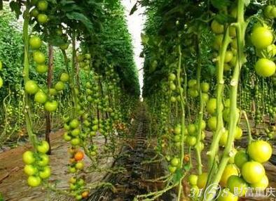 中农共信有机种植技术怎么加盟培训?加盟提供设备吗,中农共信培训费是多少钱,中农共信有机瓜菜工厂加盟费,