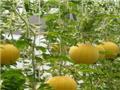 有考察中農共信的嗎?加盟中農共信有機瓜菜種植掙錢嗎