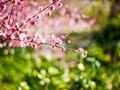2018重庆哪些地方可以看梅花?重庆周边梅花观赏地有哪些?