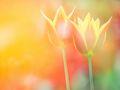 2018什么时候立春具体是哪一天?立春是什么?