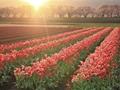 2018重庆南川欧卉荷兰花卉乐园好玩吗?门票多少钱?
