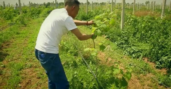 他靠800亩葡萄走上致富路,农产品的前景好不好?