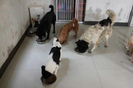 龙溪狗屋的食物储备开始告急