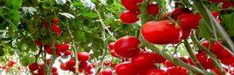2018开一个蔬菜工厂有前景吗?前期投入大概要多少资金