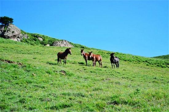 草坪上的野驴图