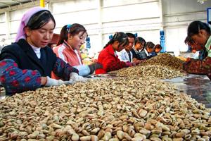 农村加工厂致富项目:玉米深加工项目
