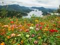 洛阳赏红叶好去处有哪些?洛阳赏枫叶在哪比较好?