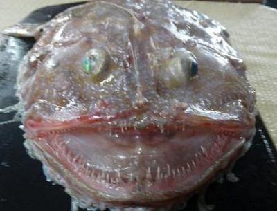 亚发现奇怪深海生物