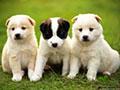 养宠物要注意哪些问题?如何预防宠物带来的病毒