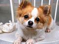 家里养宠物对身体有没有危害?宠物容易传染哪些变病