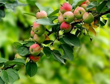绿叶水果县级市如何加盟?绿叶水果加盟一般流程是什么