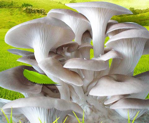 中盛永基食用菌加盟