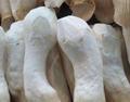 中盛永基食用菌还能加盟吗?加盟条件是什么?