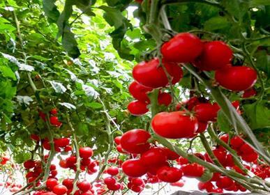 中农共信有机瓜菜工厂需要投资多少钱