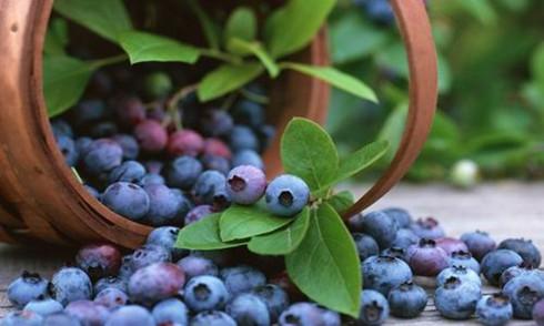 好喝的蓝莓饮料健康的保健食品
