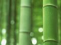 为什么现在竹纤维在市场上如此受欢迎?