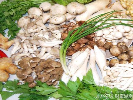 中盛永基食用菌代理赚钱吗