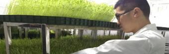 种植菜立方芽苗菜投资多少费用?总部提供什么支持